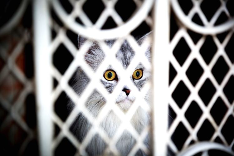 Domestic Cat Animal Themes Feline Pets Looking At Camera One Animal Portrait Yellow Eyes Domestic Animals Close-up Mammal No People Outdoors Day Canon Canon5DIII 24-70mm L F/2.8 || USM Home Photography Verninuchongphotography VerninUChong