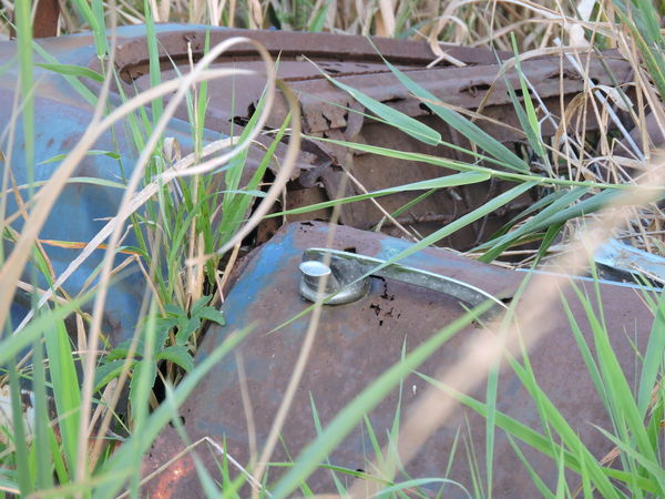 1942 Pontiac abandoned in the wetlands Beauty In Nature Blade Of Grass Blue Close-up Day Detail Focus On Foreground Grass Green Green Color Growth Nature No People Outdoors Part Of Plant Rusted Car Selective Focus Tranquility Twig