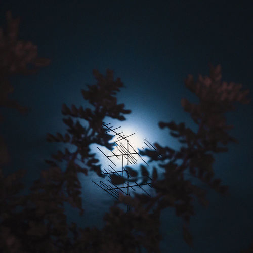 Sky Plant Tree Silhouette Nature Growth Beauty In Nature No People Tranquility Low Angle View Night Outdoors Dusk Cloud - Sky Focus On Foreground Selective Focus Sunset Scenics - Nature Tranquil Scene Dark Coniferous Tree Moonlight