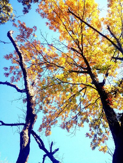 Autumn Colors Beautiful colours.. :) Nice Views Nature On A Hike