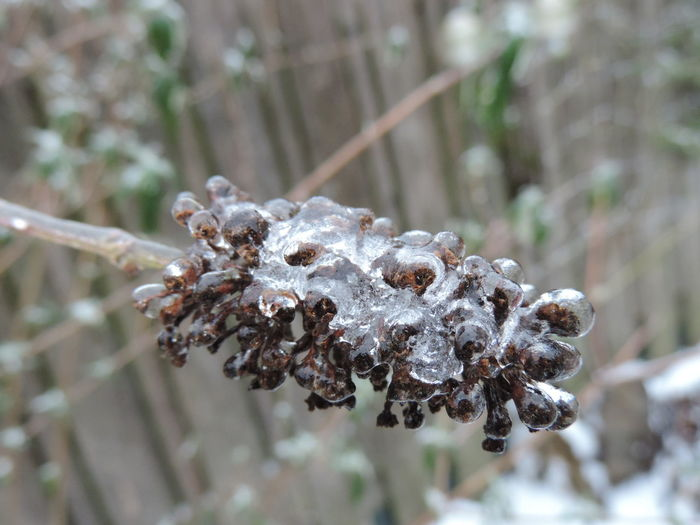 Close-up Day Frozen Nature Frozen Plants Ice Nature No People Outdoors