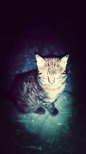 street cat?