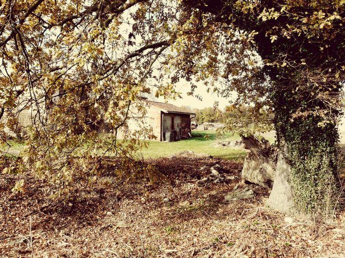 Viaje Toulouse Casa Rural Francia Arboles Travel House Tree Natural My Photo