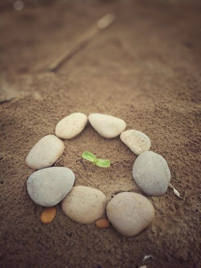 Good Morning! Plant Stone Planteta Naixent Nature Sand