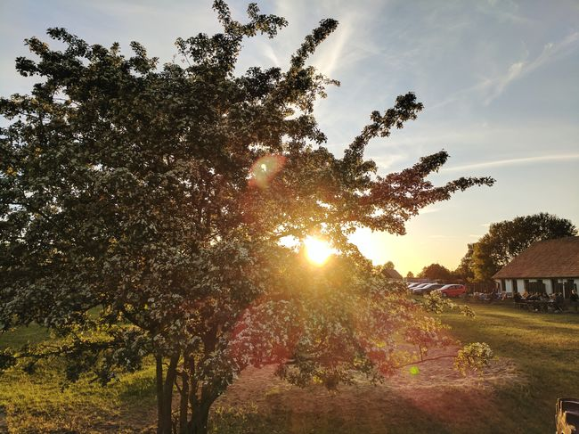 Tree Countryside Country Life Nature Sunset Flare Flares In Nature Flares Blossoms  Sunlight People Family Vacation Vacations Outside Dining Friends The Great Outdoors - 2017 EyeEm Awards