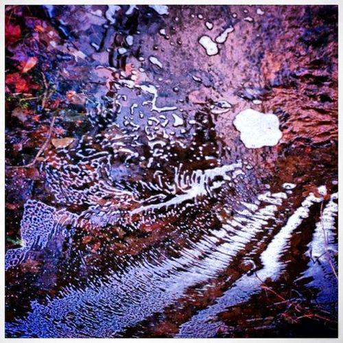 Automne Autumn Creativity Design Eau Flaque  Flaque D'eau Reflet