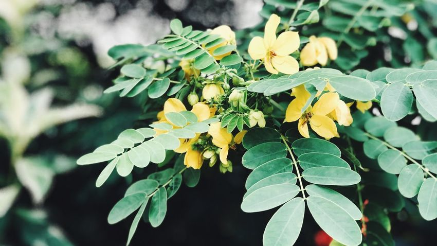 Leaf Green Color Growth Nature Outdoors Plant Day Beauty In Nature Freshness Close-up No People Yellow Fragility Flower