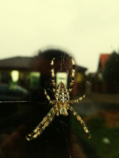 Spider Insect Spider One Animal Spider Web Close-up Animal Themes No People Animals In The Wild Survival Day Sky Outdoors Animal Wildlife ...more
