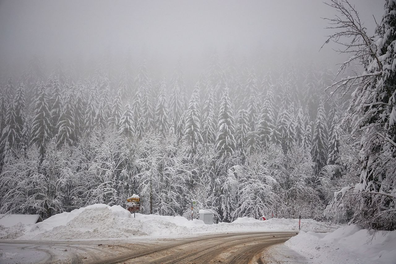 winter, cold temperature, snow, nature, plant, day, tree, no people, transportation, fog, land, road, scenics - nature, beauty in nature, frozen, land vehicle, tranquility, mode of transportation, environment, outdoors, snowing