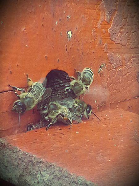 Bienen  Imkerei Zwanzig15 Schleswigholstein