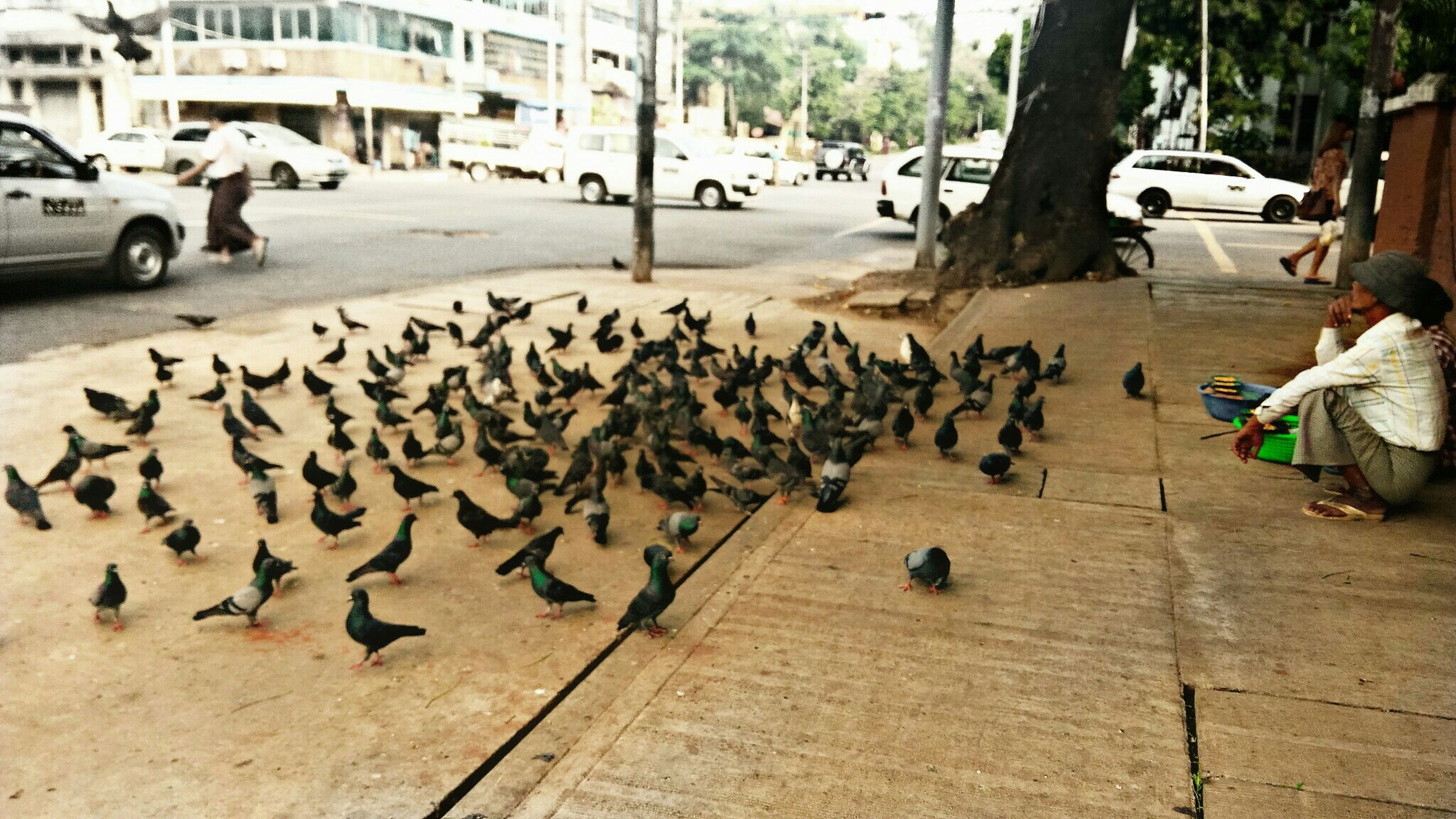 street, city, transportation, building exterior, car, land vehicle, city life, mode of transport, architecture, built structure, road, incidental people, city street, large group of people, bird, walking, animal themes, person, men