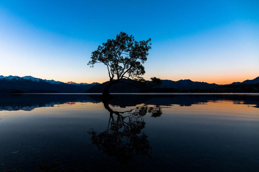 New Zealand Wanaka Tree Wanaka Sunset Siamdiscovery Godiscoversummer The Great Outdoors - 2018 EyeEm Awards