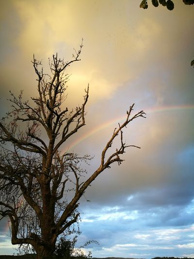 Rainbow Tree Sky Outdoors Multi Colored Beauty In Nature No People Silhouette Nature Background Backgrounds EyeEmNewHere EyeEm Best Shots - Nature EyeEm Nature Lover EyeEm Best Shots Guten Morgen Dramatic Sky Tranquil Scene