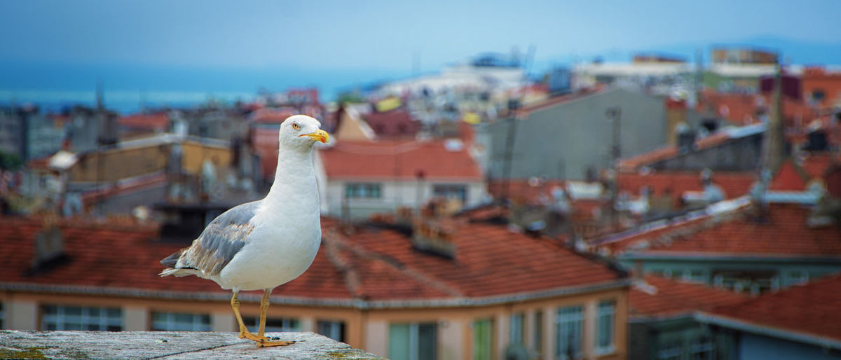 Cityscape Rooftop Animal Themes Animal Wildlife Animals In The Wild Architecture Bird Building Exterior Built Structure City Close-up Day Focus On Foreground No People One Animal Outdoors Perching Sea Seagull Sky