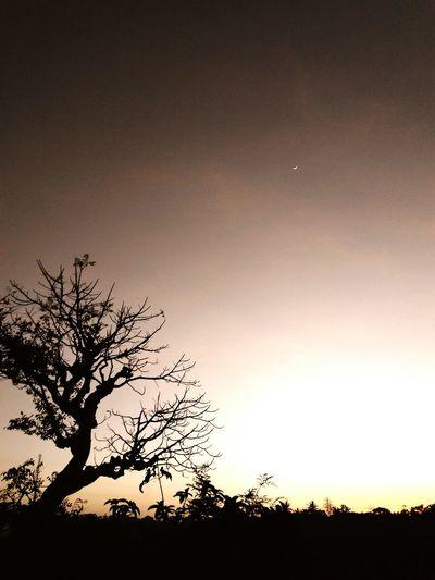Tree Moon Beauty In Nature Sky No People Nature Night Clear Sky Lombok Island DELTA API Rumahalir NTB Landscape