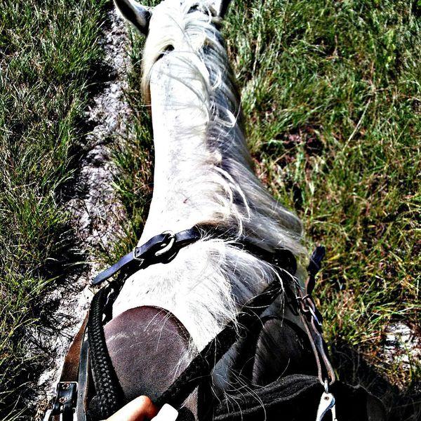 Forrest and I Whitehorse , Summer2015 , Horsebackriding  , Sanford , Florida