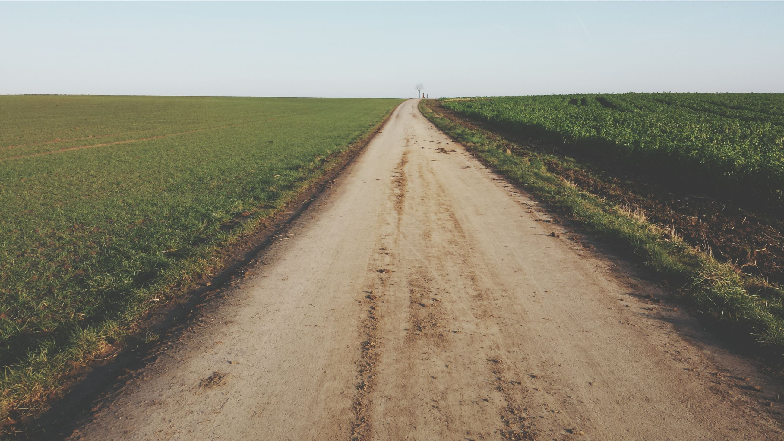 the way forward, diminishing perspective, agriculture, rural scene, landscape, vanishing point, field, tranquil scene, tranquility, farm, dirt road, transportation, road, grass, growth, nature, crop, clear sky, country road, scenics