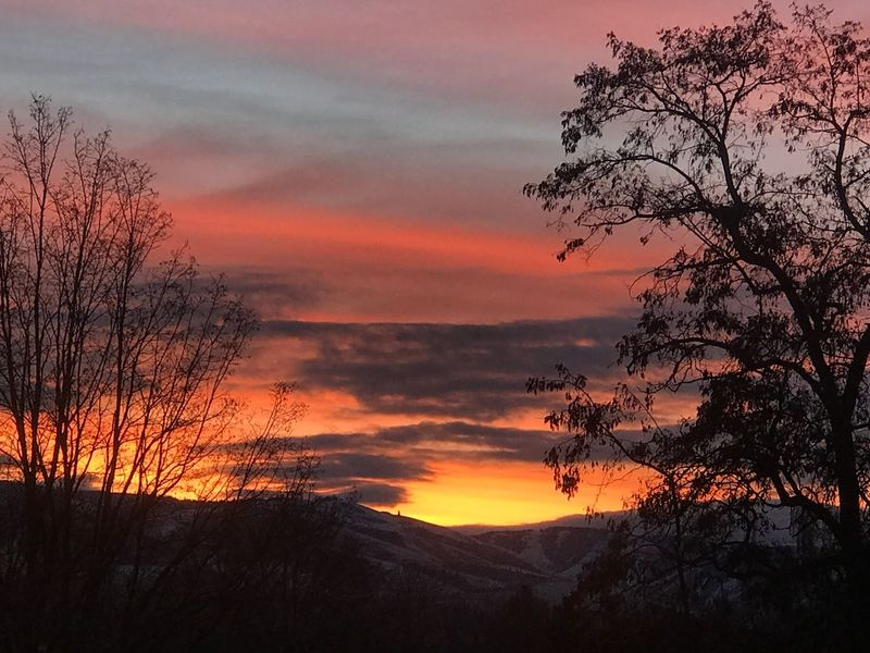 Sunrise Fire In The Sky Winter Sunrise Sunset Beauty In Nature Tree Silhouette Orange Color Nature Scenics