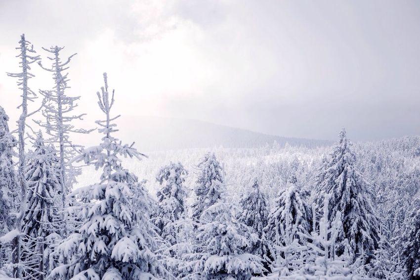 Winter Einfach So :) Wald Urlaub My Work Im Wald Nature