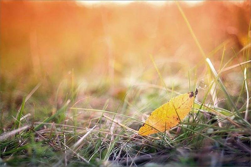 🍂 Autumn Leaves Fall Falltime Season  Seasons Instafall Instagood Instaautumn Photooftheday Leaf Foliage Colorful Orange Red Autumnweather Fallweather Nature Sonya7 Sonyalpha Fayritale осень сказка