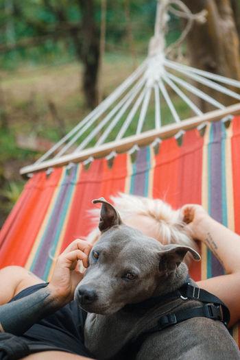 Dog lying down on hammock