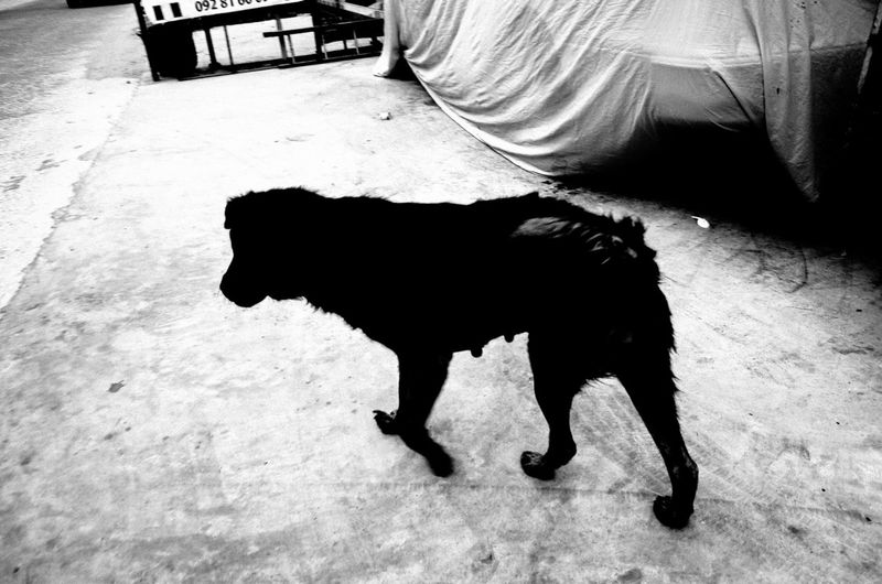 Black And White Dog Domestic Animals EyeEm Best Shots No People The Week Of Eyeem The Week On EyeEm Welcome To Black The Street Photographer The Street Photographer - 2017 EyeEm Awards