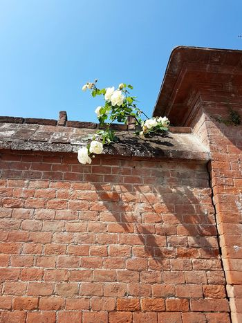 Outdoors Day No People Flower Clear Sky Building Exterior Nature Architecture Roses Sunlight Langhe Piedmont Italy Historic Building History Built Structure Travel Destinations