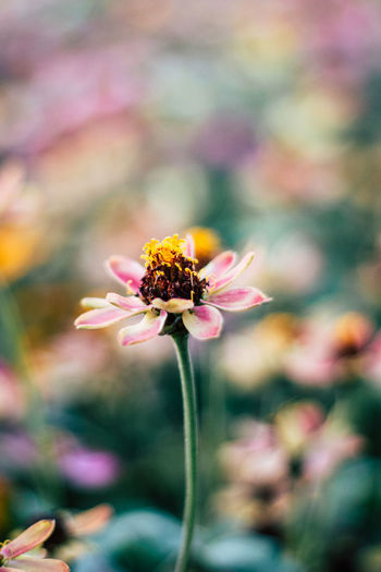 Beauty In Nature Close-up Flower Flower Head Flowering Plant Focus On Foreground Fragility Growth Inflorescence Insect Nature Outdoors Petal Plant Pollination Vulnerability