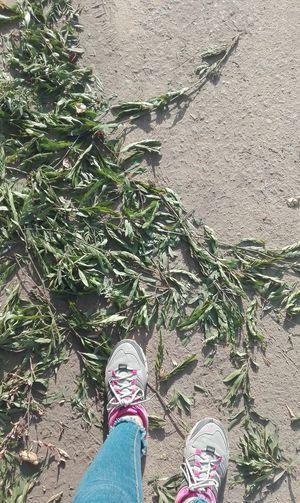 Sneakers Floorleaves Simplicity Suneffect Walking Bluepants Shaping Green