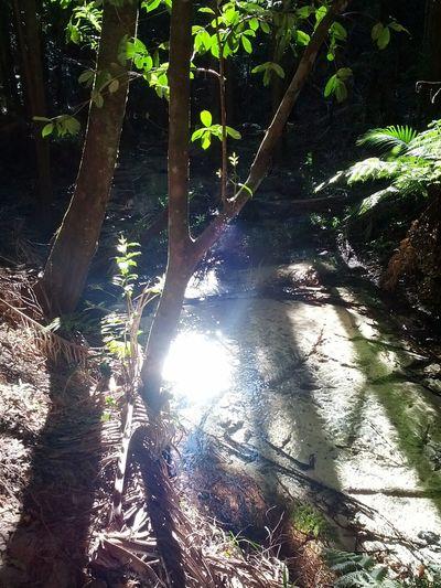 Rainforest Fraser Island The Purist (no Edit, No Filter) Eyemnaturelover