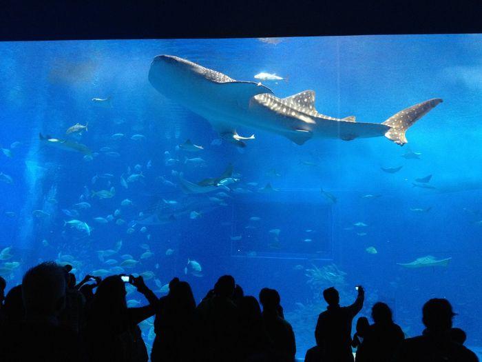 水族館 Aqarium 鮫 Shark 魚 Fish