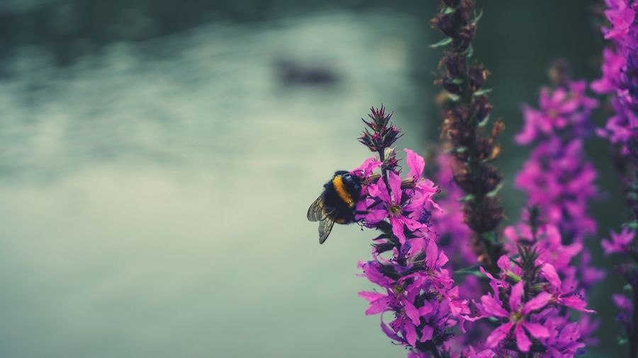 Flower Flowering Plant Insect Animal Themes Invertebrate Animal Animals In The Wild Animal Wildlife One Animal Beauty In Nature Plant Fragility Petal Bee Freshness Flower Head Vulnerability  Focus On Foreground Pollination Growth