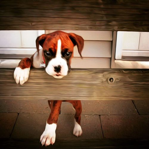 Domestic Animals Pets Animal Themes Dog One Animal Mammal Looking At Camera Portrait Zoology Animal Head  Pampered Pets Animal Loyalty Looking Day At Home No People