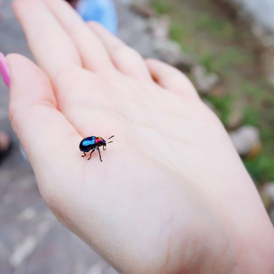 ladybug on hand Ladybug EyeEm Nature Lover EyeEm Selects Animal Hand EyeEm Best Shots Insect Human Hand Insect Perching Close-up Animal Wing Butterfly - Insect Animal Markings Tiny Bug Moth Mosquito Beetle Animal Antenna