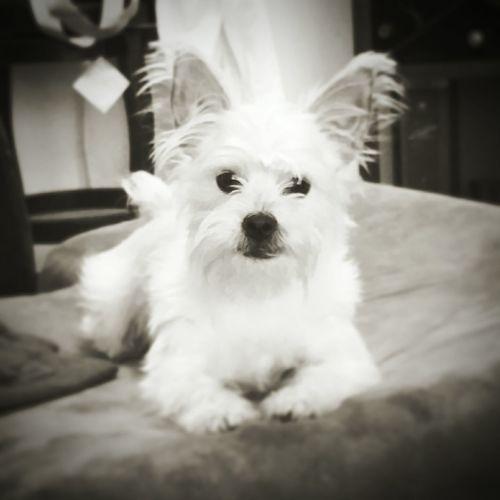 Cute Dog  Cute Pets my model!