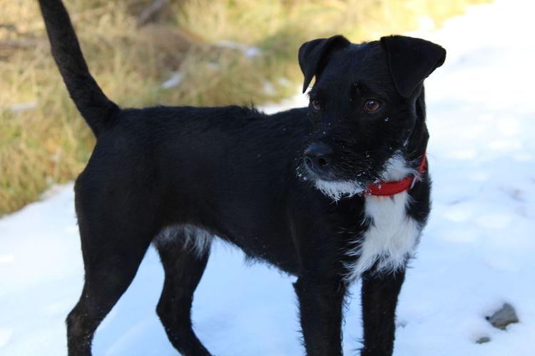 Black dog on snow covered land