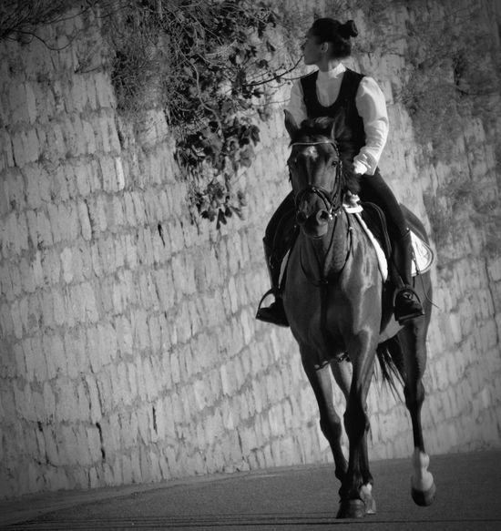 Bnw_friday_eyeemchallenge Bnw_street Italian Culture Italy Sardegnaofficial Monochrome Black And White Photography Black And White Bnw_collection Horse B&w Street Photography Sardinia Sardegna Italy  Sardegna Bolotana Nikon D5200