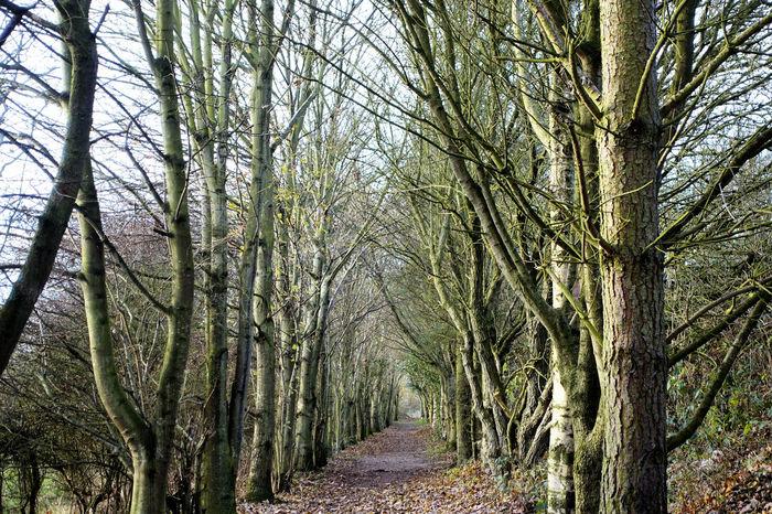 Berwick Trees Winter Winter Walk With My Dog