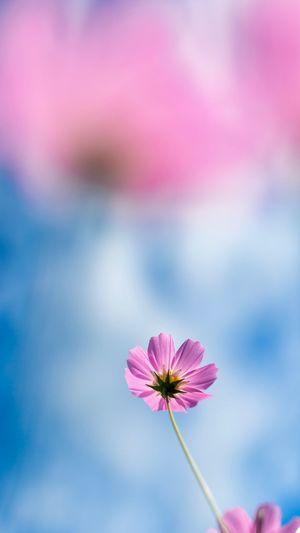 Skyward Flower