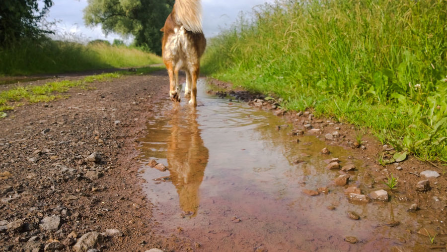Rear View Of Dog Walking On Dirt Road