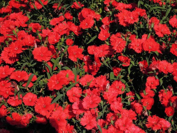 はな 花 はな 赤い 赤 植物