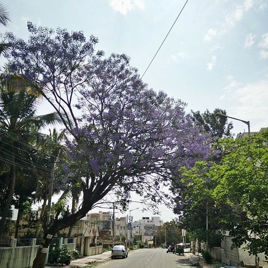 Weekend Bengaluru Summer Sunnyday Friends Roam Purple Flowers Onepluslife NeverSettle