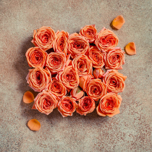 Flower Flowering Plant Plant Close-up Freshness Beauty In Nature Indoors  No People Petal Rosé High Angle View Nature Vulnerability  Fragility Flower Head Rose - Flower Inflorescence Orange Color Directly Above Flooring Flower Arrangement Bunch Of Flowers Bouquet