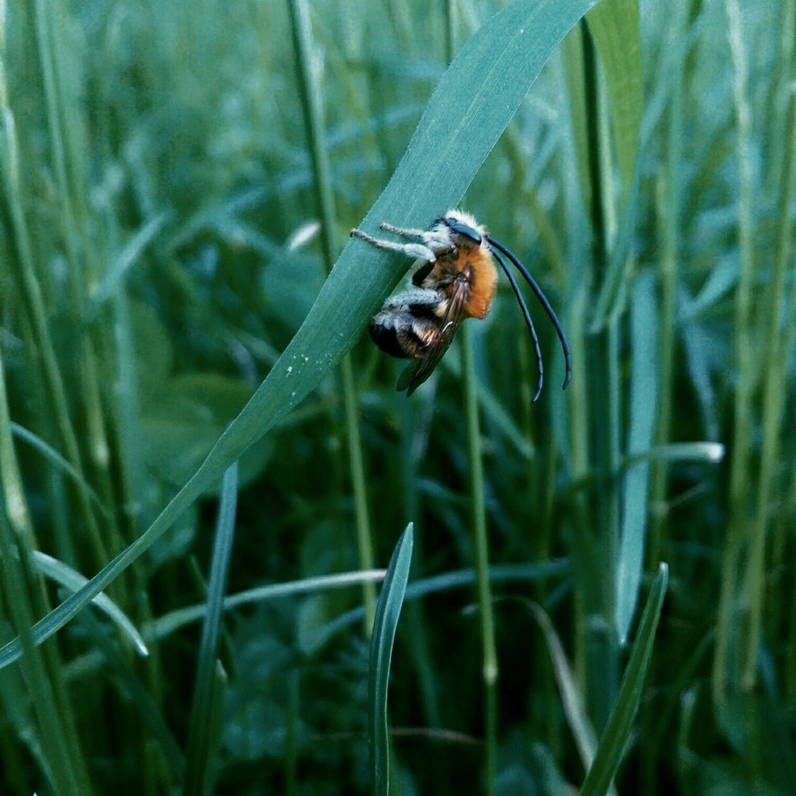 insect, animal themes, one animal, animals in the wild, wildlife, grass, plant, green color, close-up, selective focus, focus on foreground, nature, growth, outdoors, beauty in nature, day, no people, leaf, zoology, field