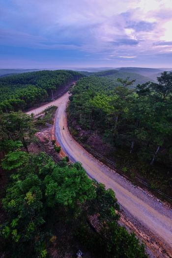 Scenic view of road amidst trees against sky