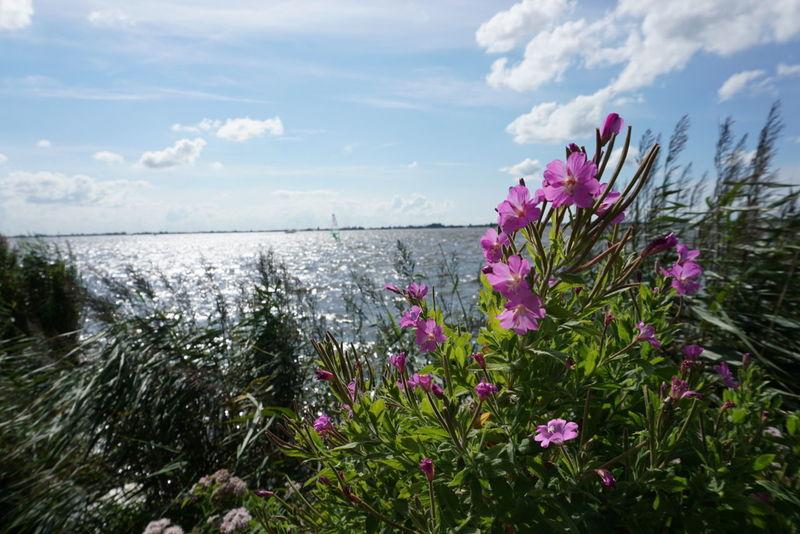Breathing Space Feel Free Nature Sneek Sneekweek Holland Sea