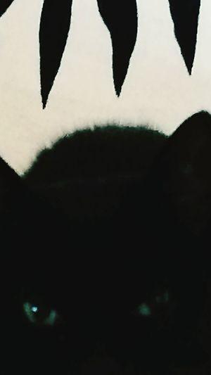 Love Gilda Gattonero Black Cat Photography Blackcat Colection Black Cat Love Pet Portraits