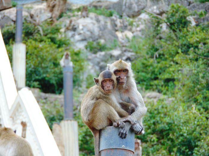 Close-up of monkey on stone wall