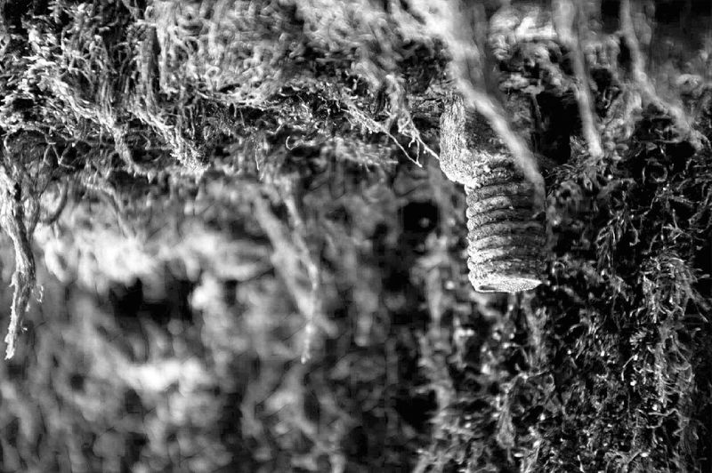 Nature Spraying No People Focus On Foreground Drop Growth Outdoors Beauty In Nature Motion Freshness Plant Tree Grass Close-up Splashing Droplet Day Black And White Blanco Y Negro