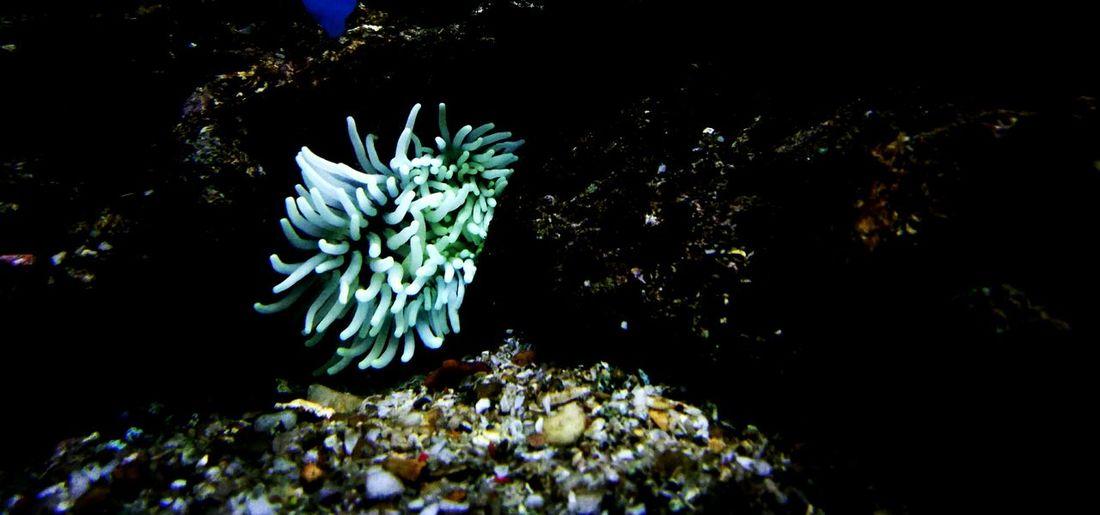Tentacle Anemons Anemon Taking Photos Marine Life